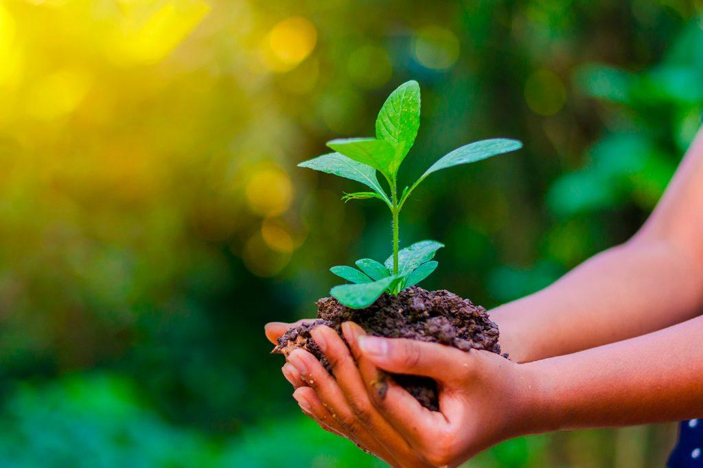 Mani che tengono una pianta